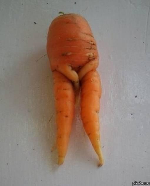 эксперимента доказали у моркови большая ботва и маленький корнеплод людей нашей стране