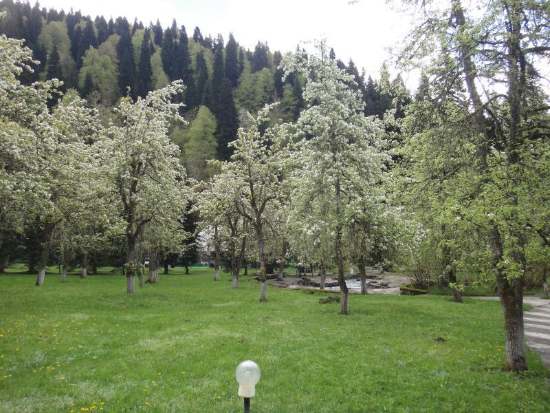 Путешествие в Абхазию на Yamaha YBR125 Post-14910-1431619292_thumb
